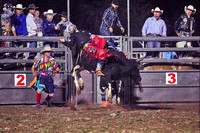 Laid back - Bull riding - Kyogle Show